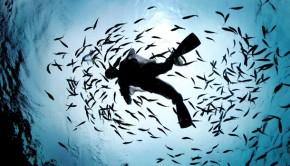 diver-fish