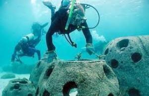 reef tarhankut